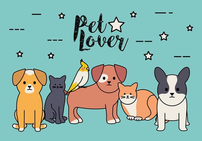 Pet of the Week – August 30, 2019
