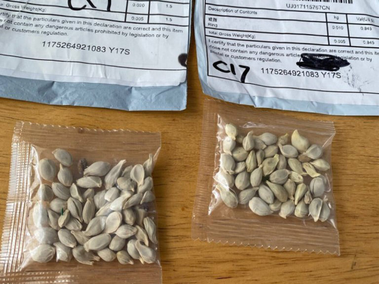 Mysterious seed packets from China have been showing up nationwide