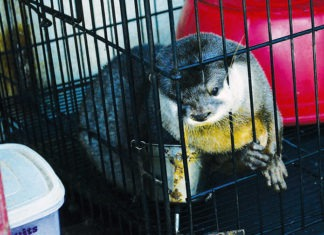 Exotic Pets in captivity