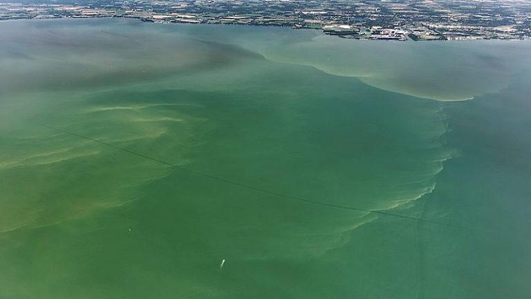 Algal Bloom Ban Lifted