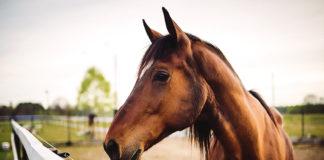Horses for Veterans with PTSD
