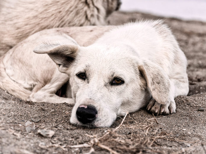Why should we adopt a pet? 6 good reasons to consider it