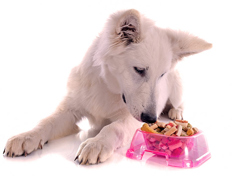 Home-cooked meals for your dog!