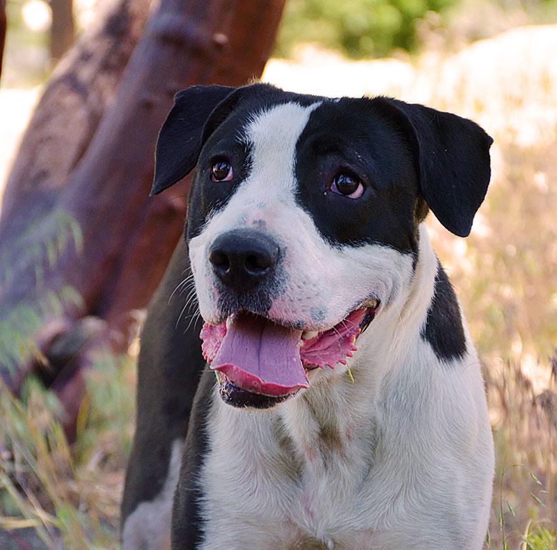 Lola - Female Terrier/Hound Mix DOB: 4/4/17