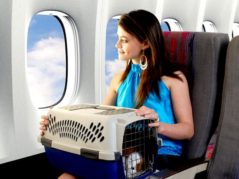 Sweeten the Kitty: Tips for Easier Traveling with Pets