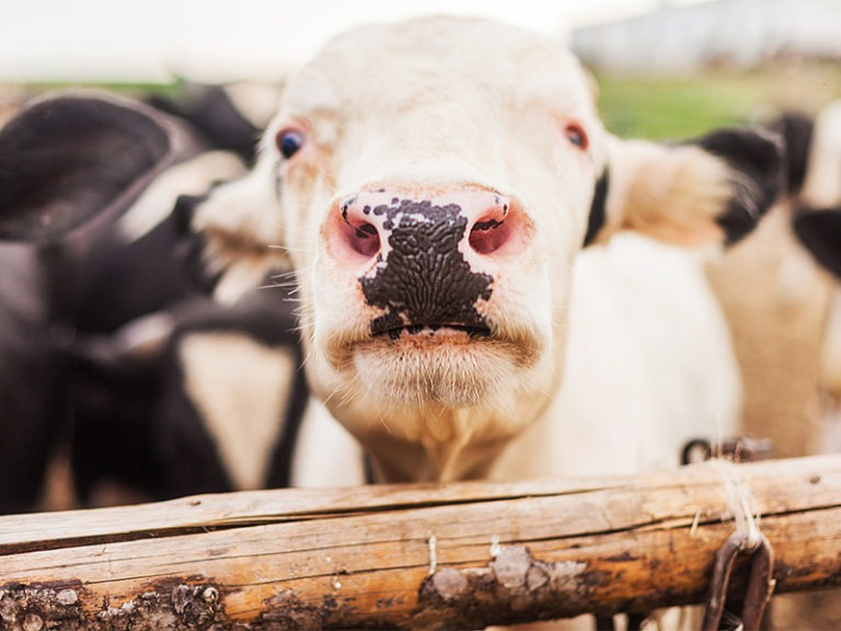 Cow abuse lawsuit against San Jacinto family based in fiction, lawyer says