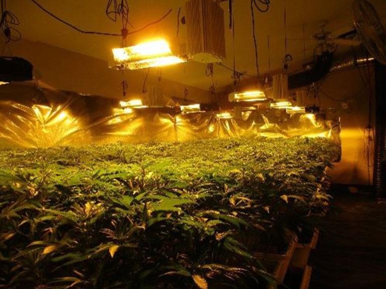 Marijuana Indoor Cultivation Warrants