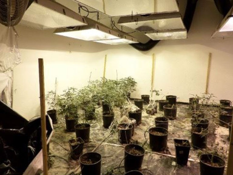Marijuana Cultivation Search Warrant and Theft of Utilities